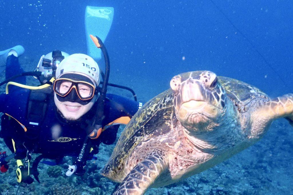 久米島ウミガメ